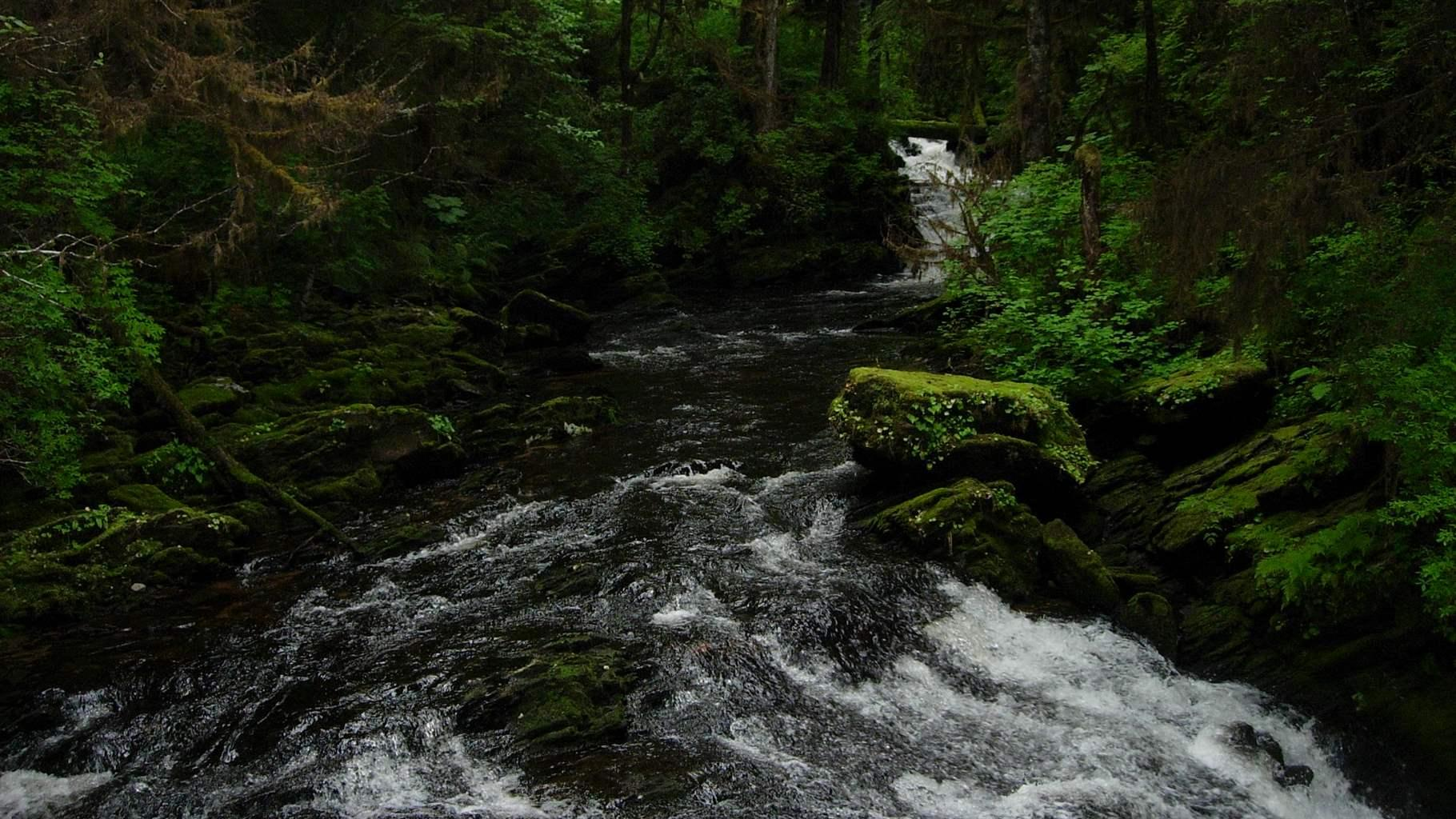 Tongass 1