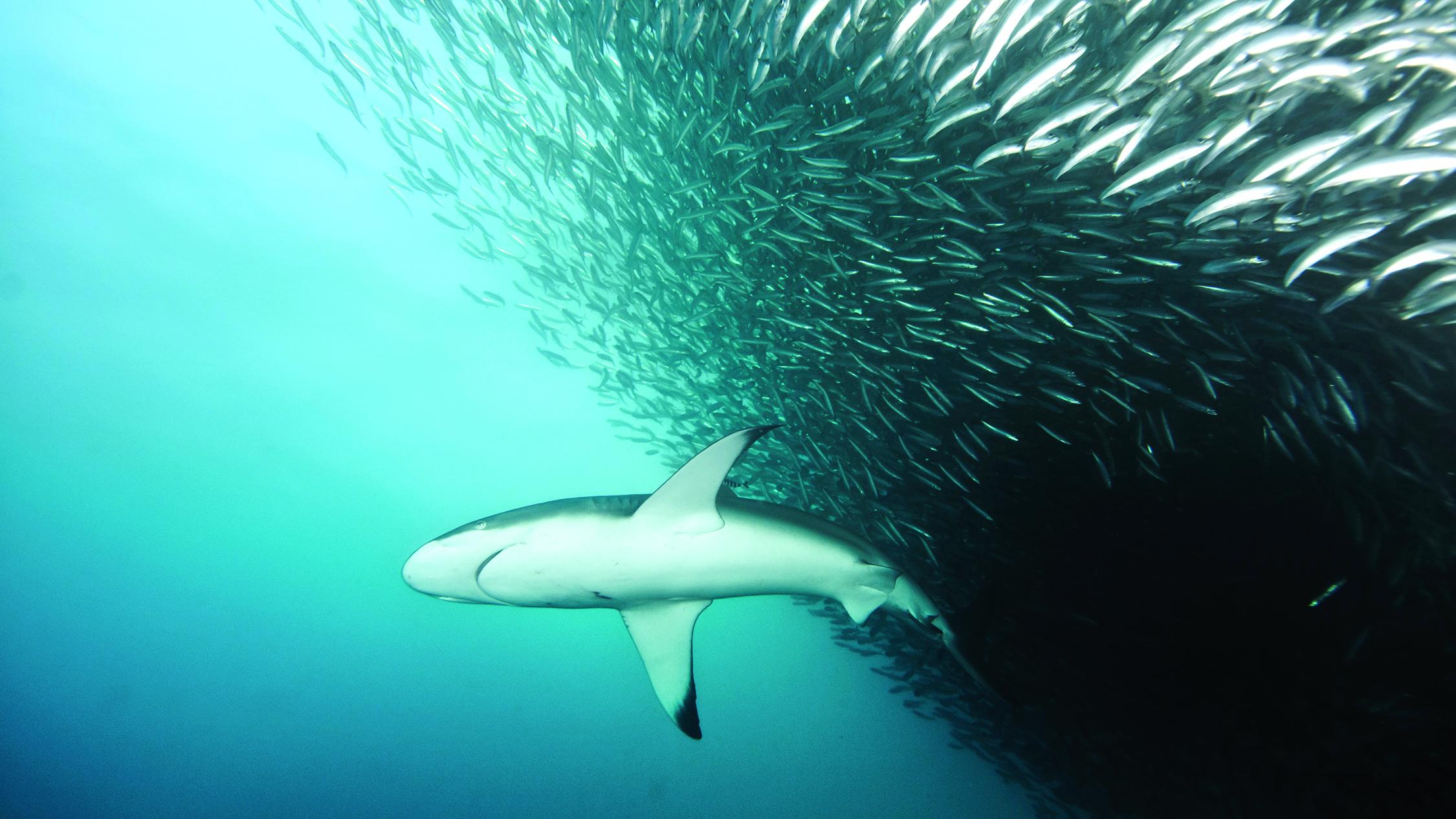 простудных картинки киты акулы дельфины твоих руках