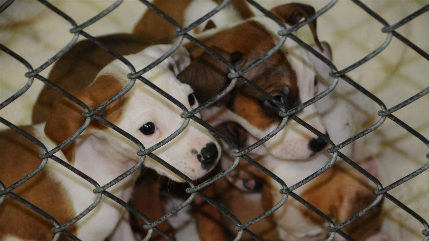 Rescue Network Sends Southern Puppies North | The Pew