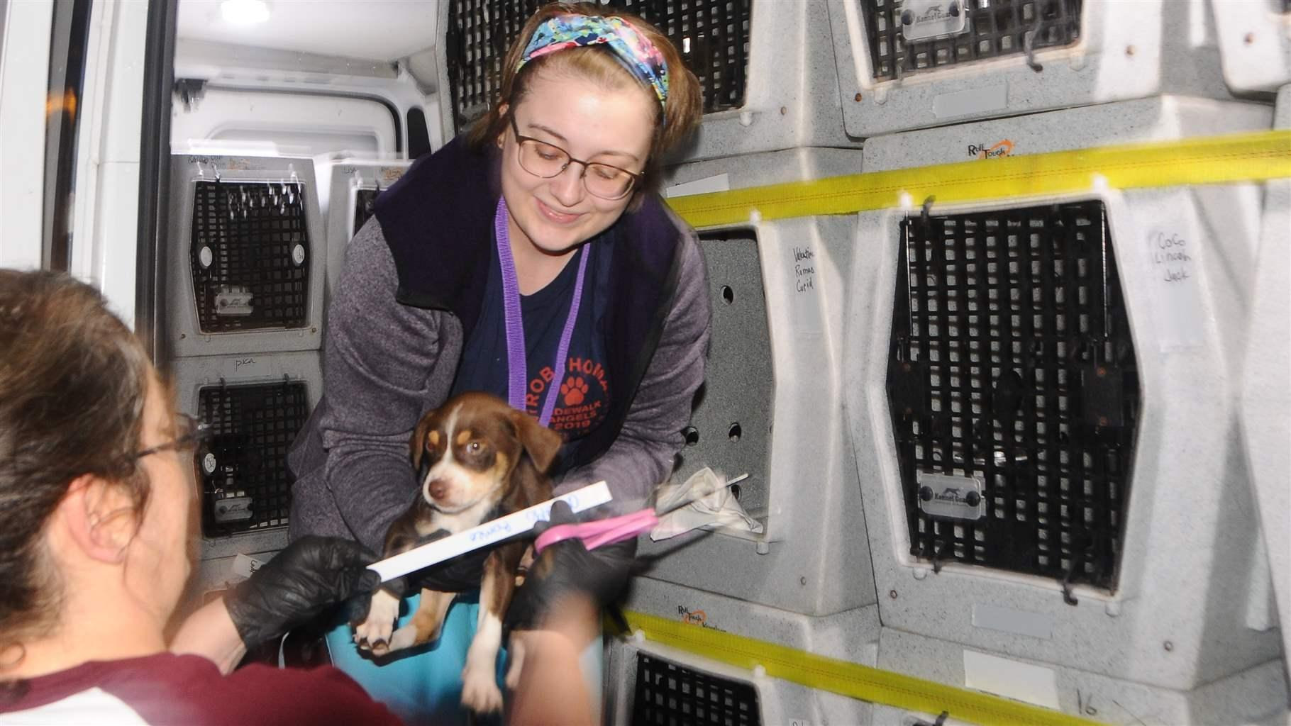 Rescue Network Sends Southern Puppies North | The Pew Charitable Trusts