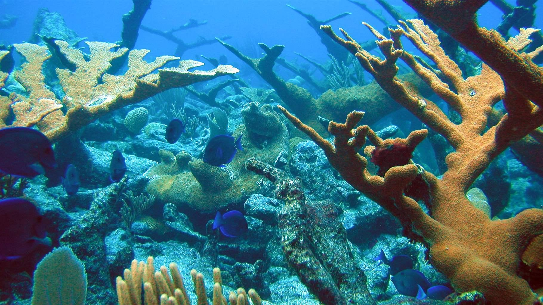Caribbean Fishery Council Delivers Big Win for Corals, Fish, and People