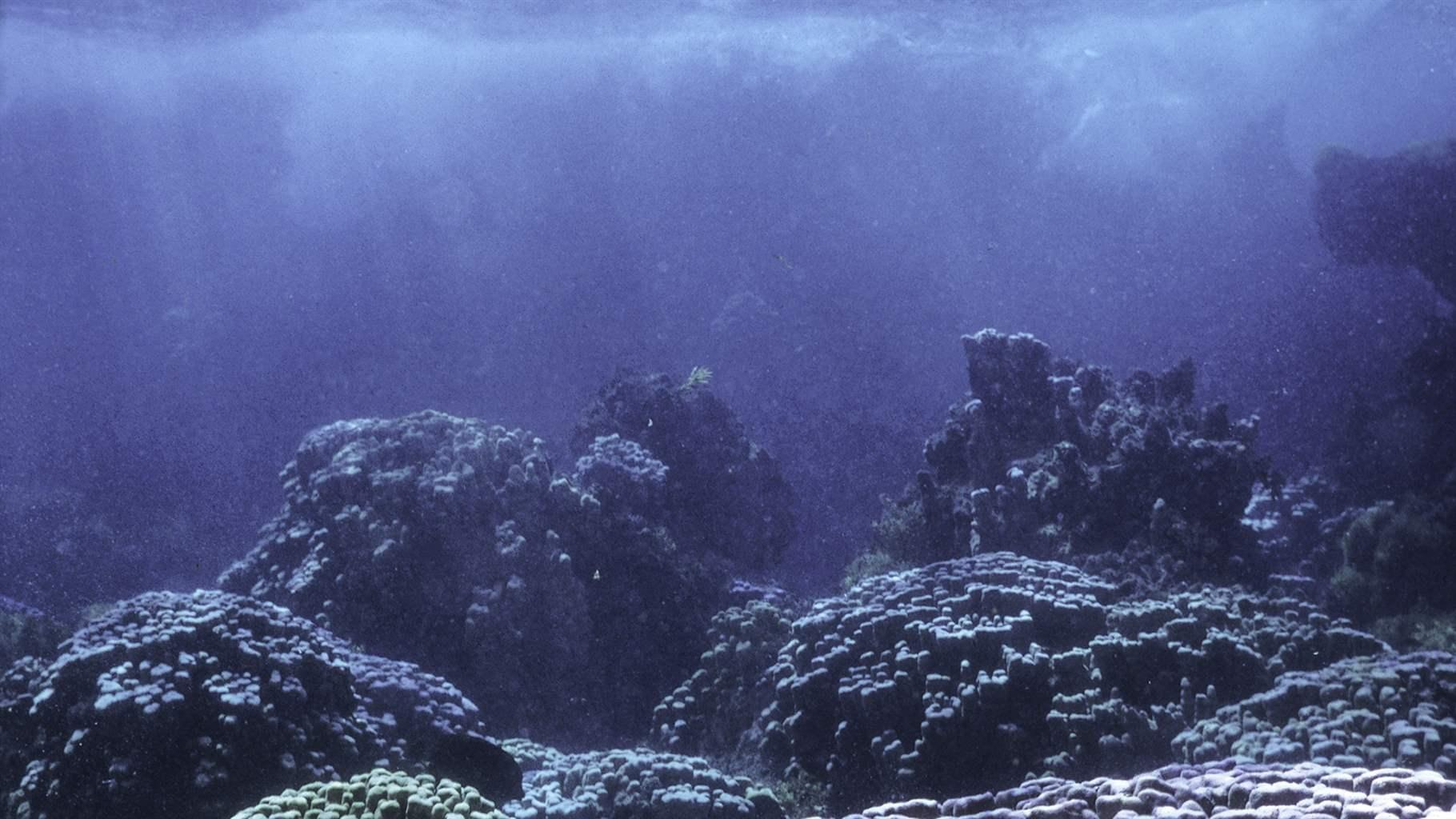 Corals in Ovahe