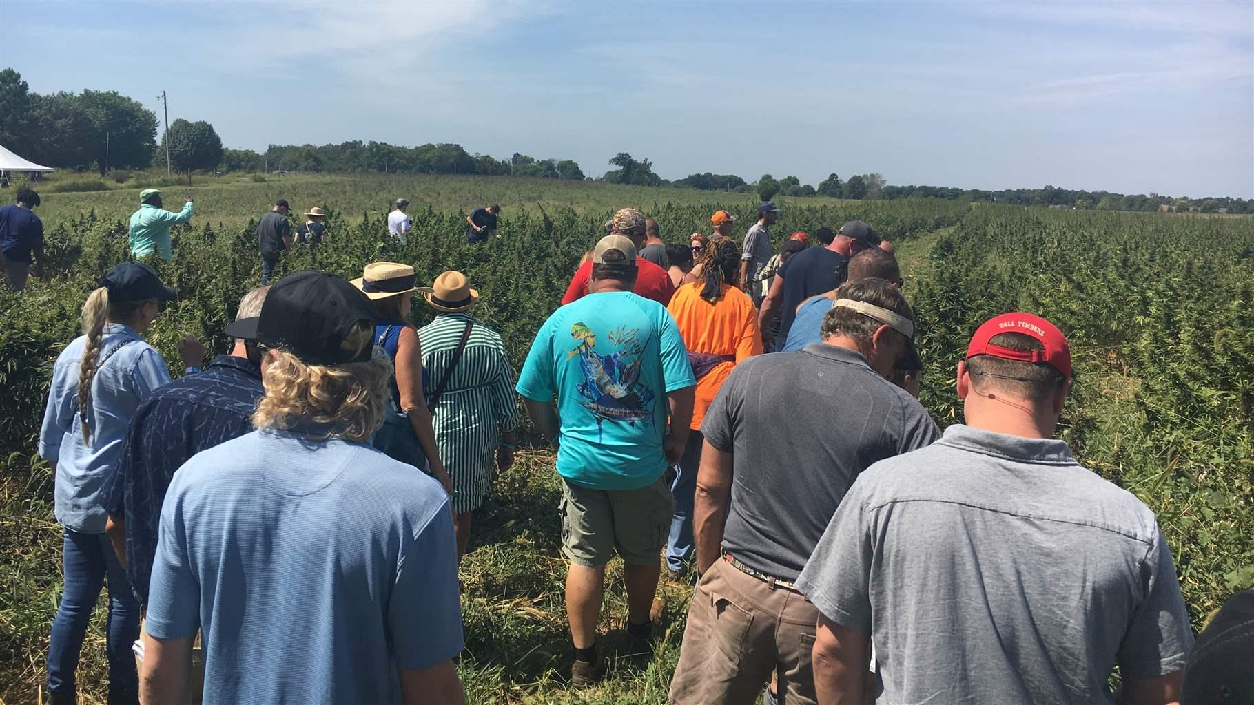 Dreaming Big For A Risky Hemp Crop The Pew Charitable Trusts