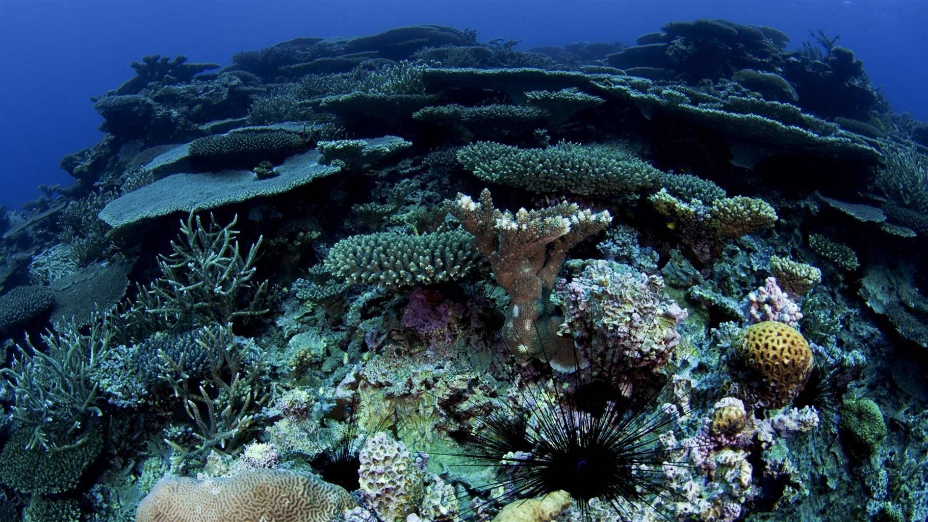 French Polynesia's Population Sees Ocean Health Declining, Want Stronger Marine Protections