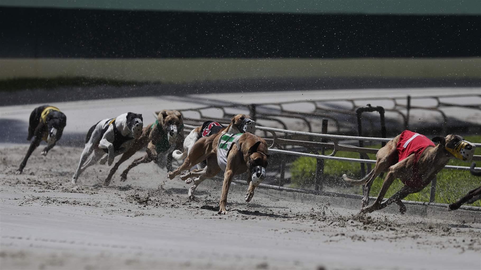 Greyhound Racing Canada