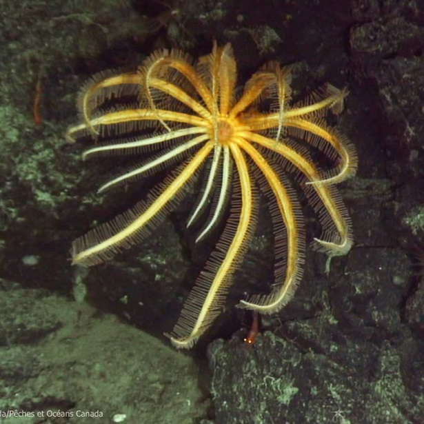 Pacific Seamounts