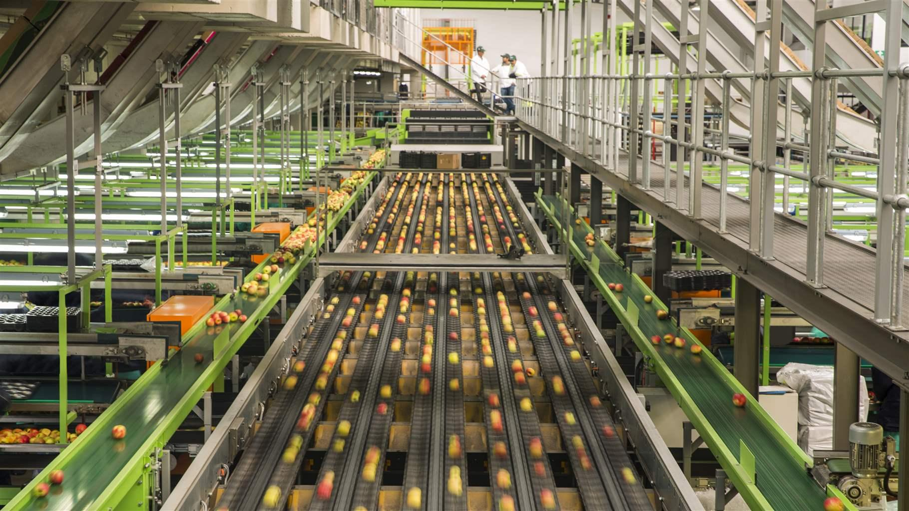 Apple factory, sorting machine