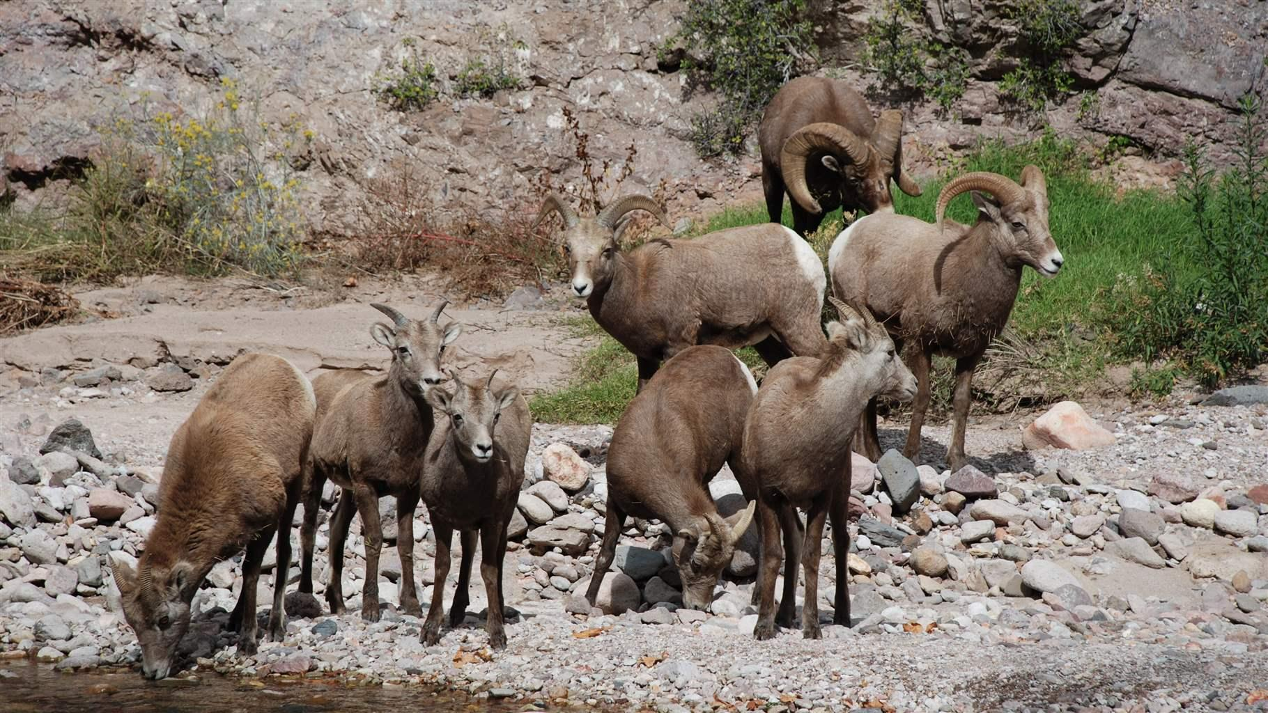 Federal Plan for Gila National Forest Fails to Protect Critical ...