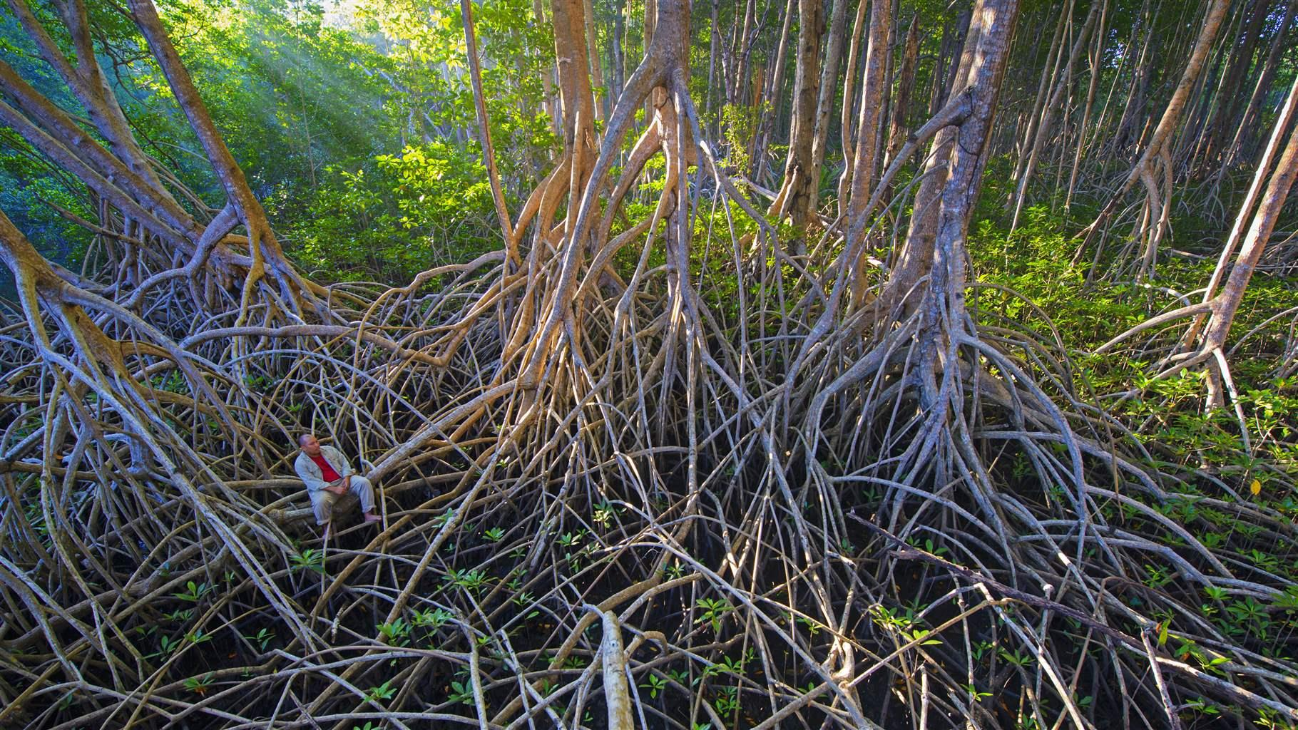 Mangrove Conservation Key