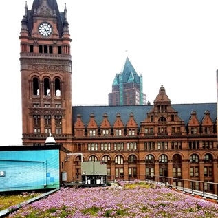 Milwaukee City Hall green roof