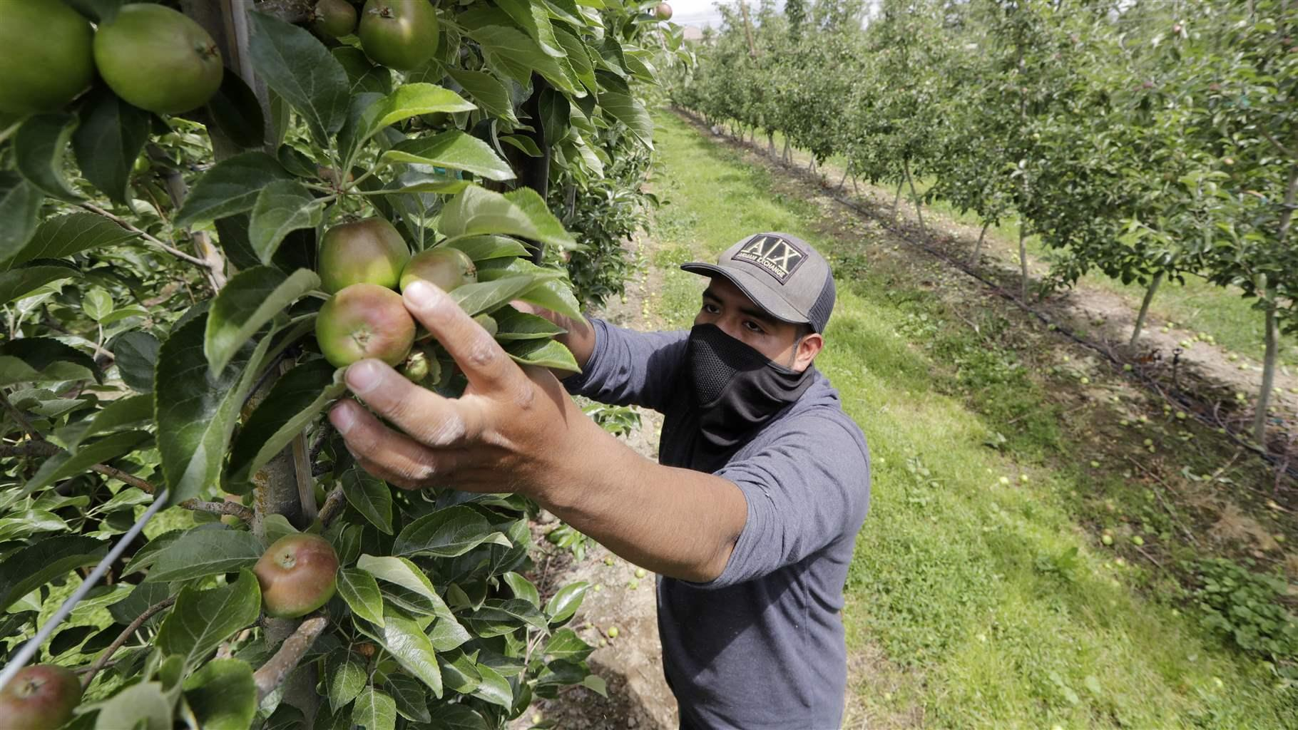 Struggling Farmers Work With Overwhelmed Food Banks to Stay Afloat
