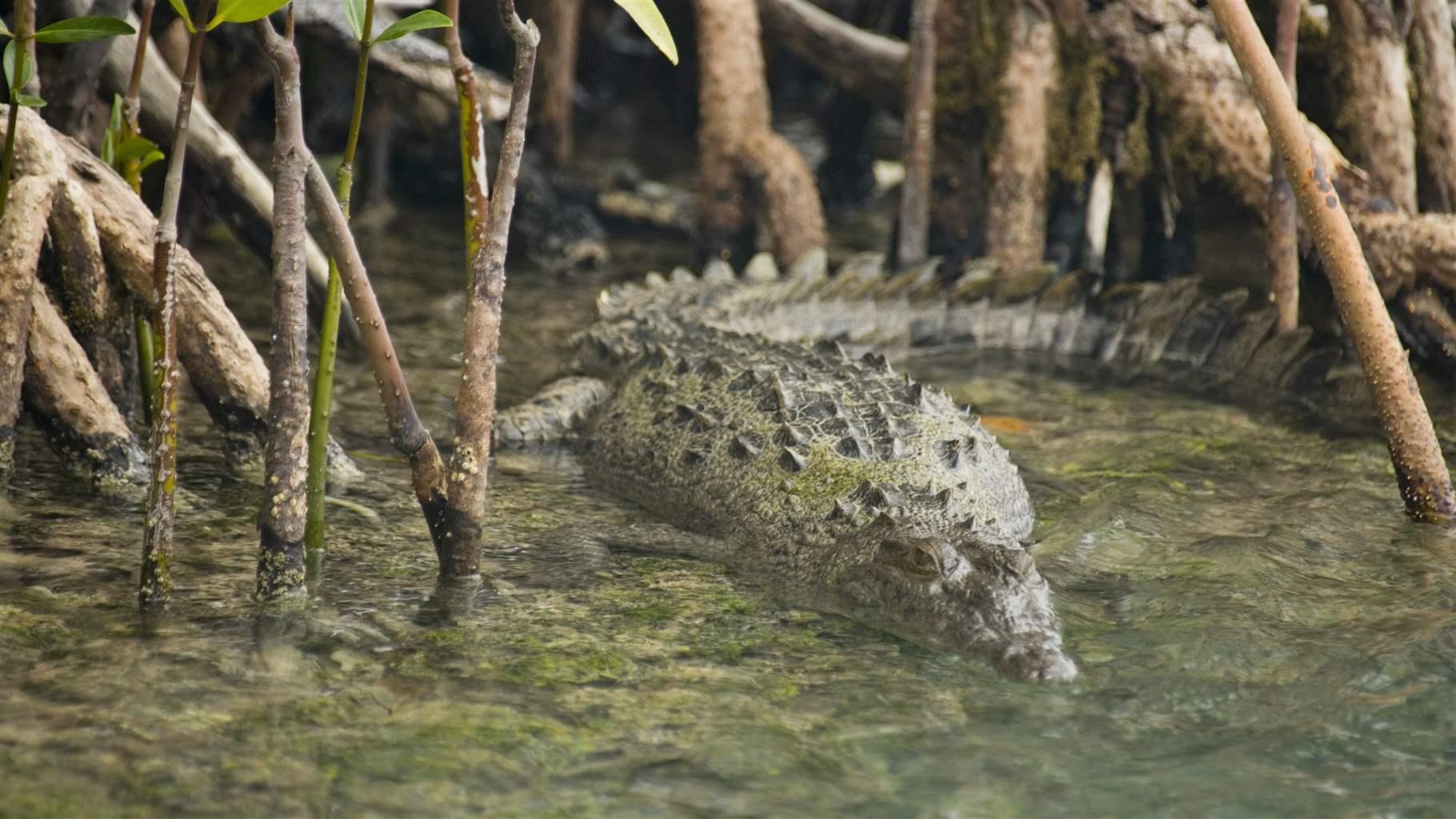 Belize-coastal-forest