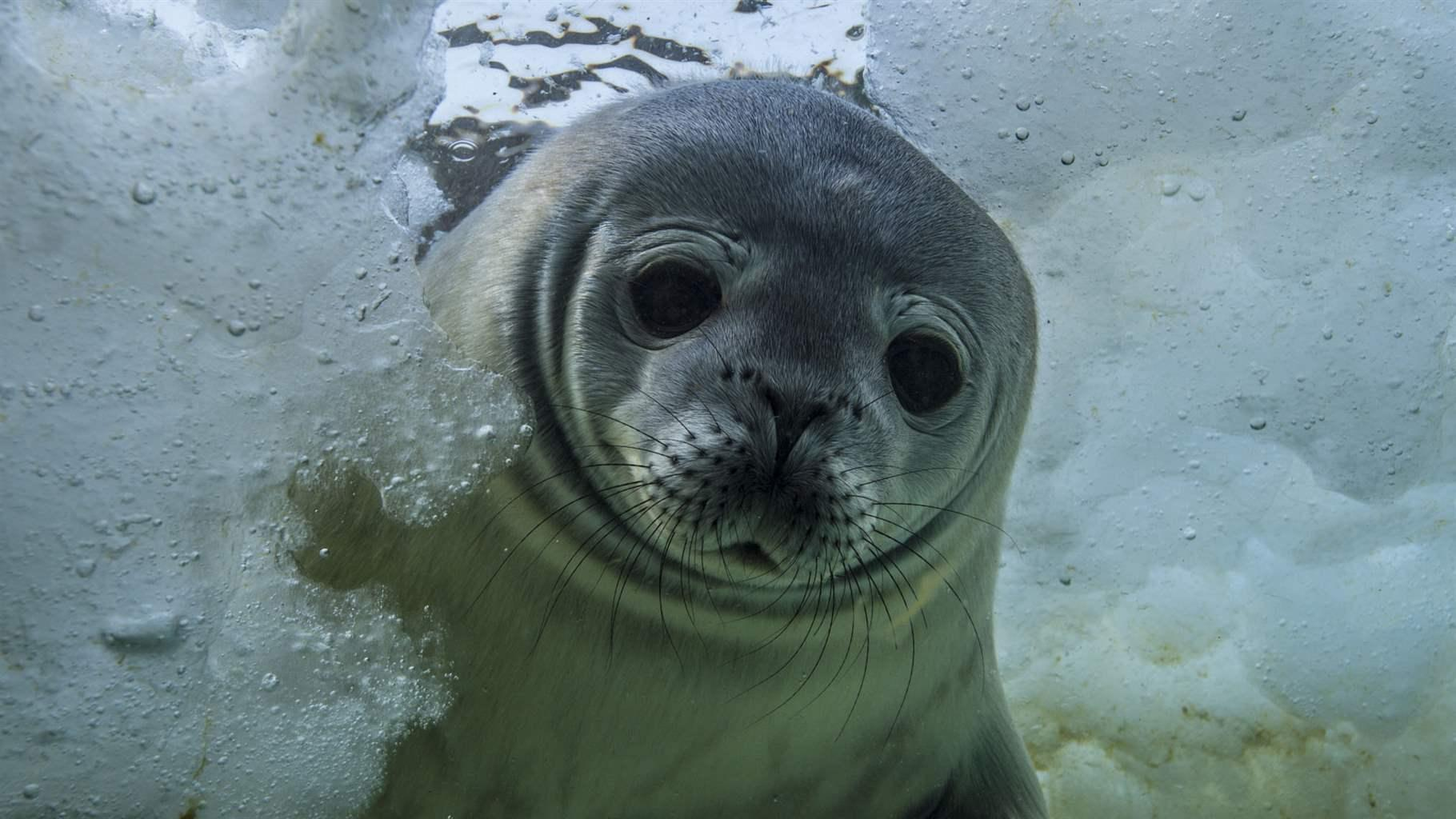 seal close up