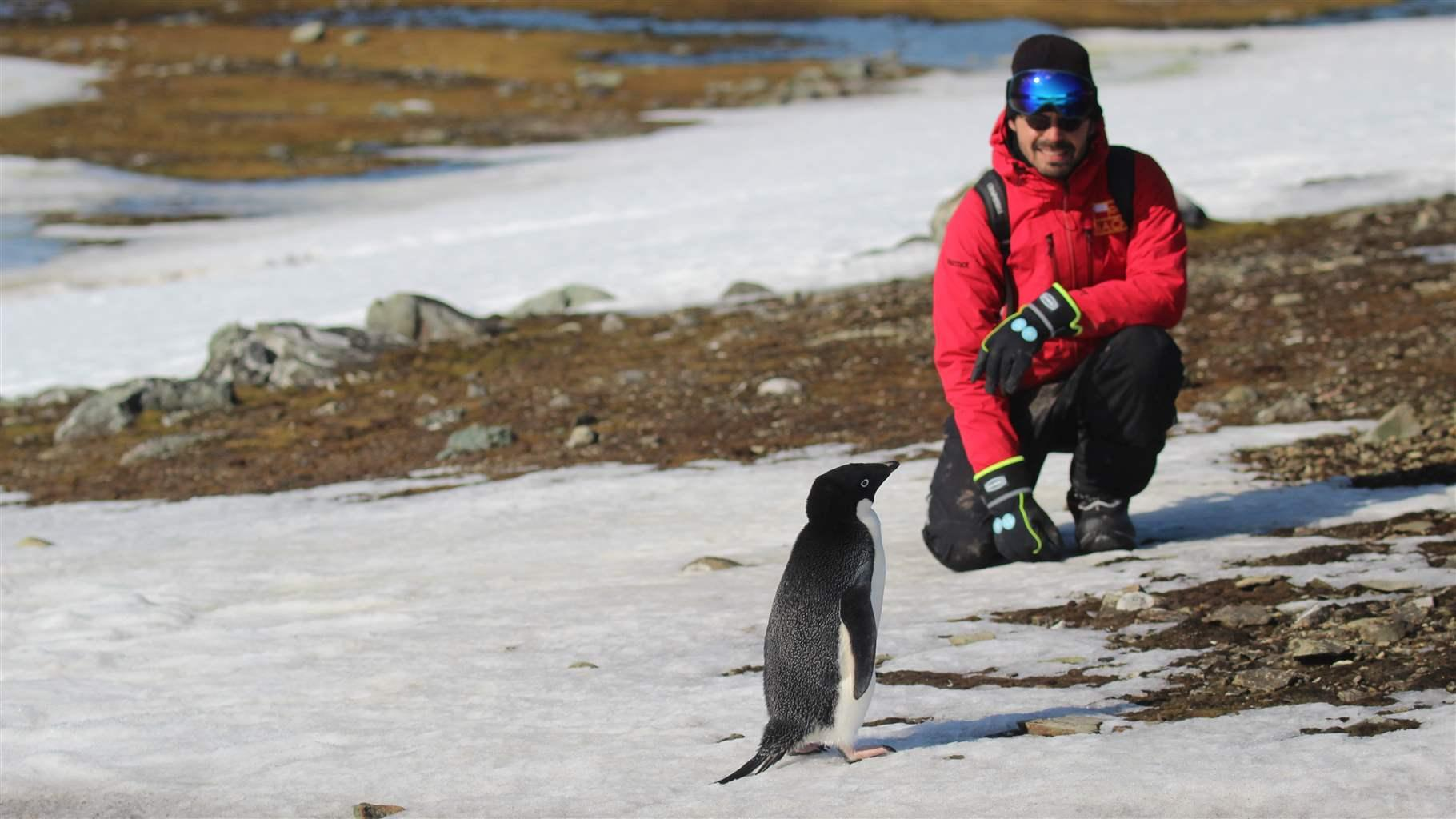 Study Confirms Antarctic Penguins Are Harmed by Krill Fishing and Climate Change