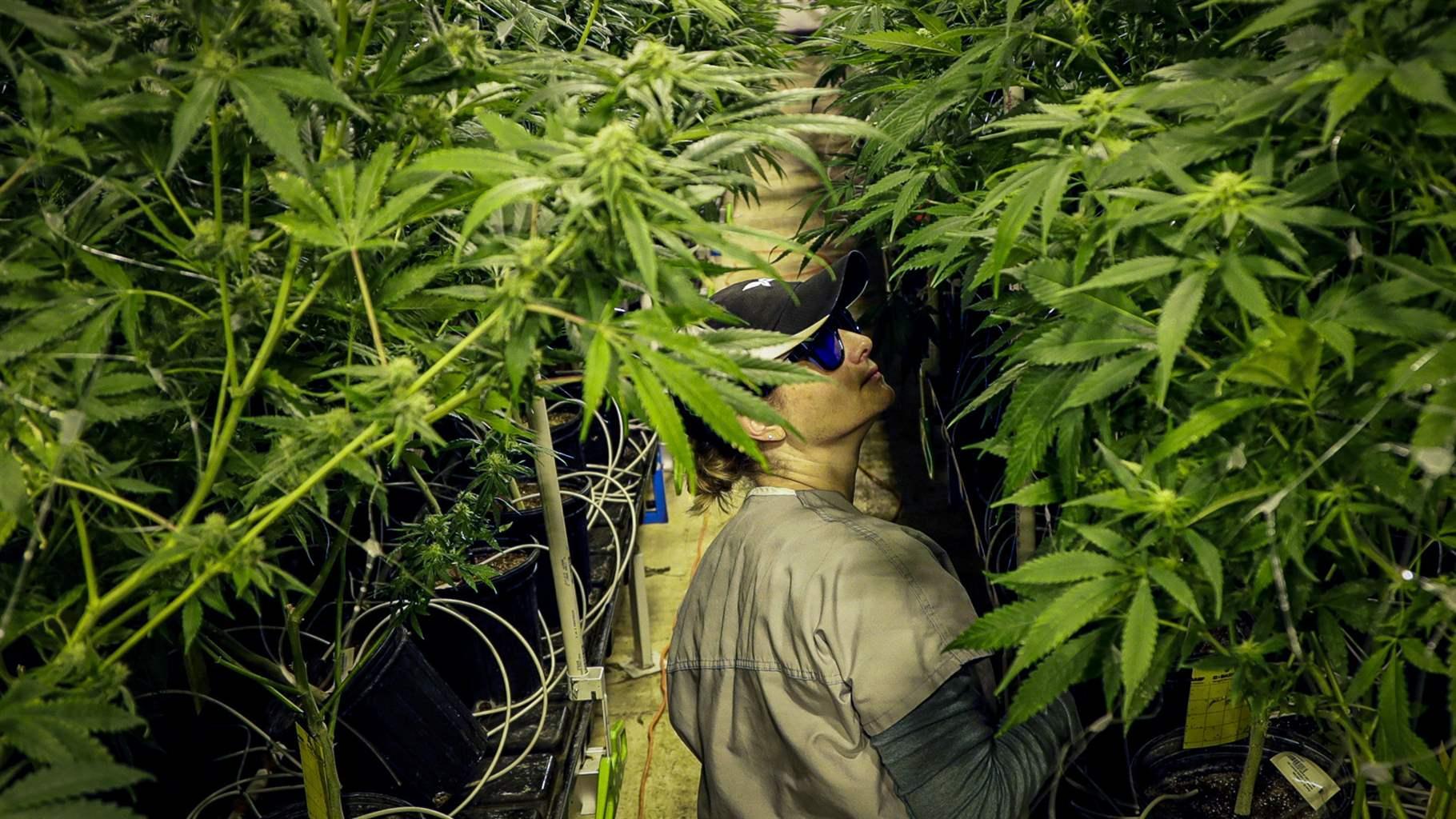 Buy marijuana London