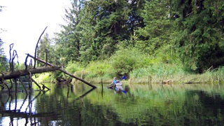 A kayaker enjoys paddling through a tidal swamp in the Nehalem River estuary in Oregon