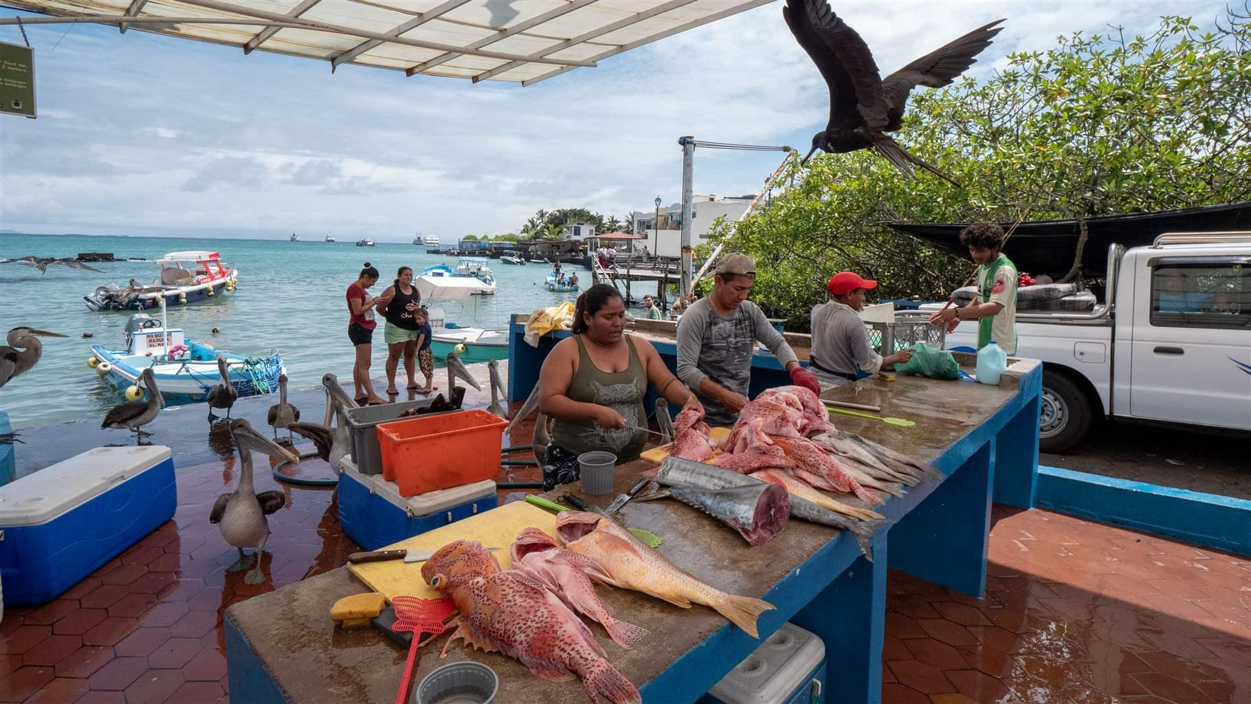Marine Protections in the Galapagos Benefit Nature Ecuadorian Fishing Fleet and Local Economy