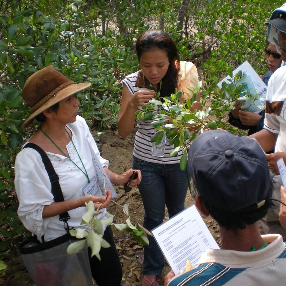 Primavera teaching researchers and other trainees at a mangrove site on Guimaras Island, Philippines.
