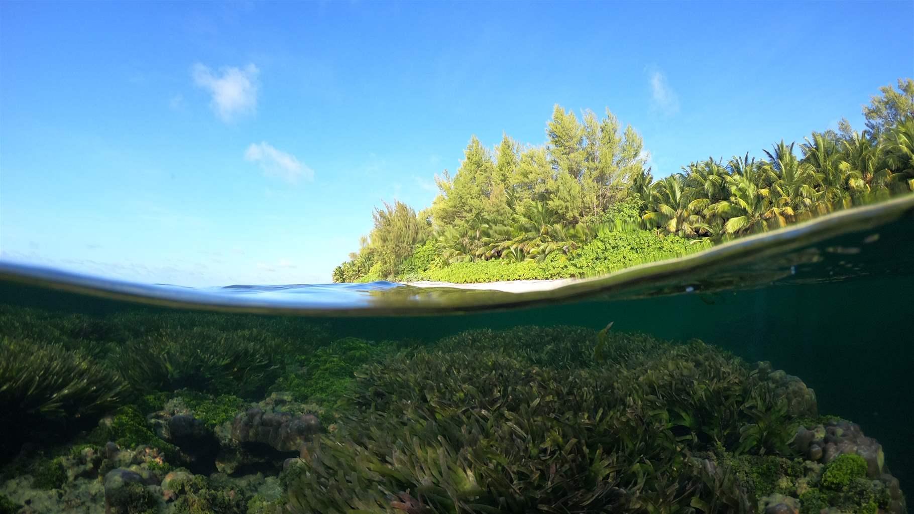 Seychelles seagrass