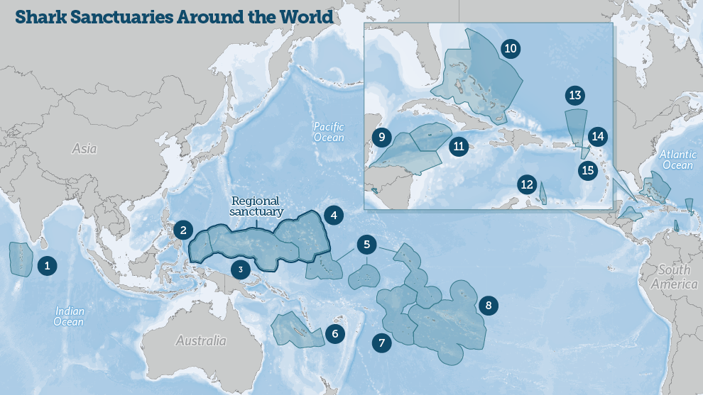 Shark sanctuaries around the world