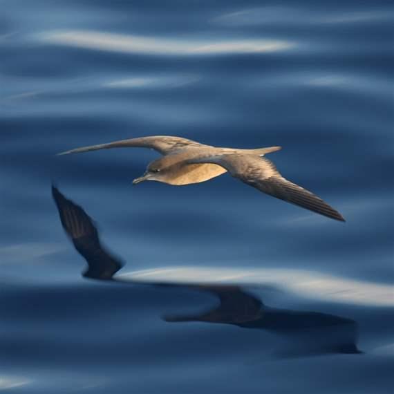 Global Ocean Legacy Kermadec