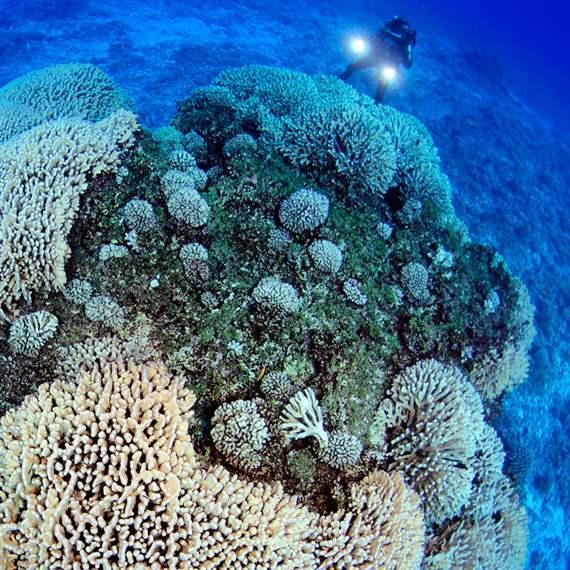 Global Ocean Legacy Pitcairn