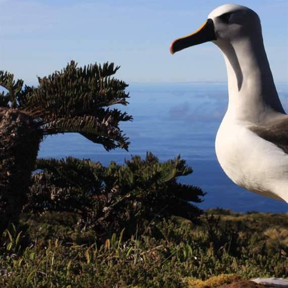 Global Ocean Legacy, Pew Trusts, Tristan da Cunha
