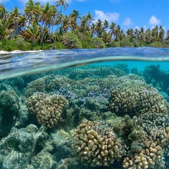 Global Ocean Legacy French Polynesia