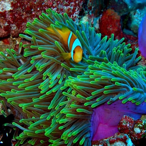 Chagos, Global Ocean Legacy