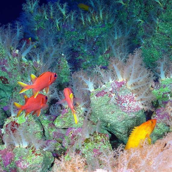 Global Ocean Legacy – Marianas