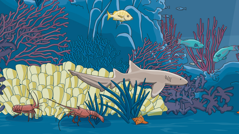 Illustrated nurse shark with coral