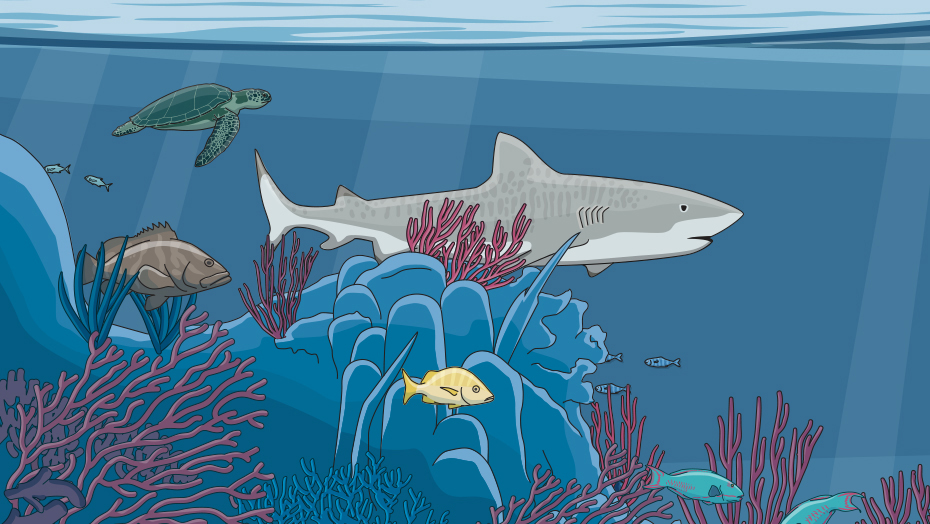 Illustrated tiger shark
