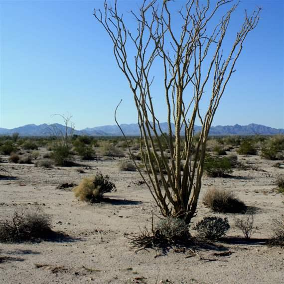 Pew Applauds BLM Draft Plan for California Desert; Seeks Further Conservation