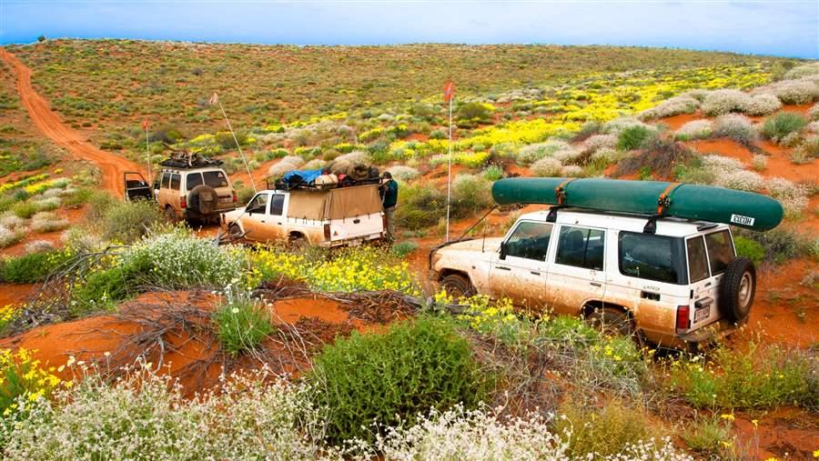 Four-wheel-driving through the Outback is a 'rite of passage' for many Australians. This group were travelling through the Simpson Desert during the stunning wildflower season.