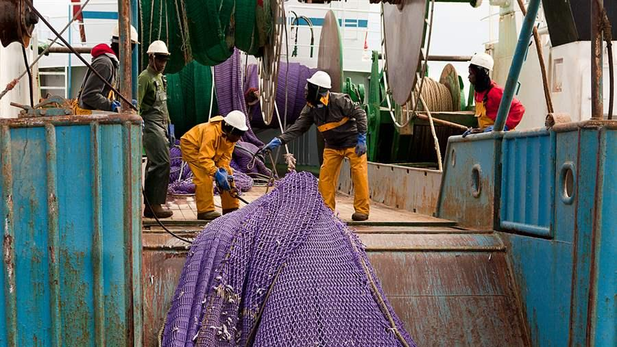 Trawl haul catch
