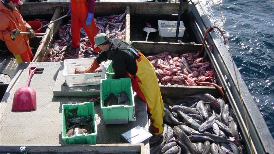 A bad bill for fish and fishermen for Is fish bad for you