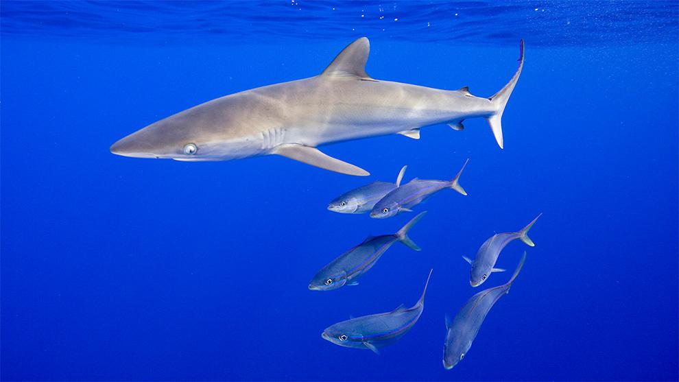 2560x1600 ocean sharks - photo #22