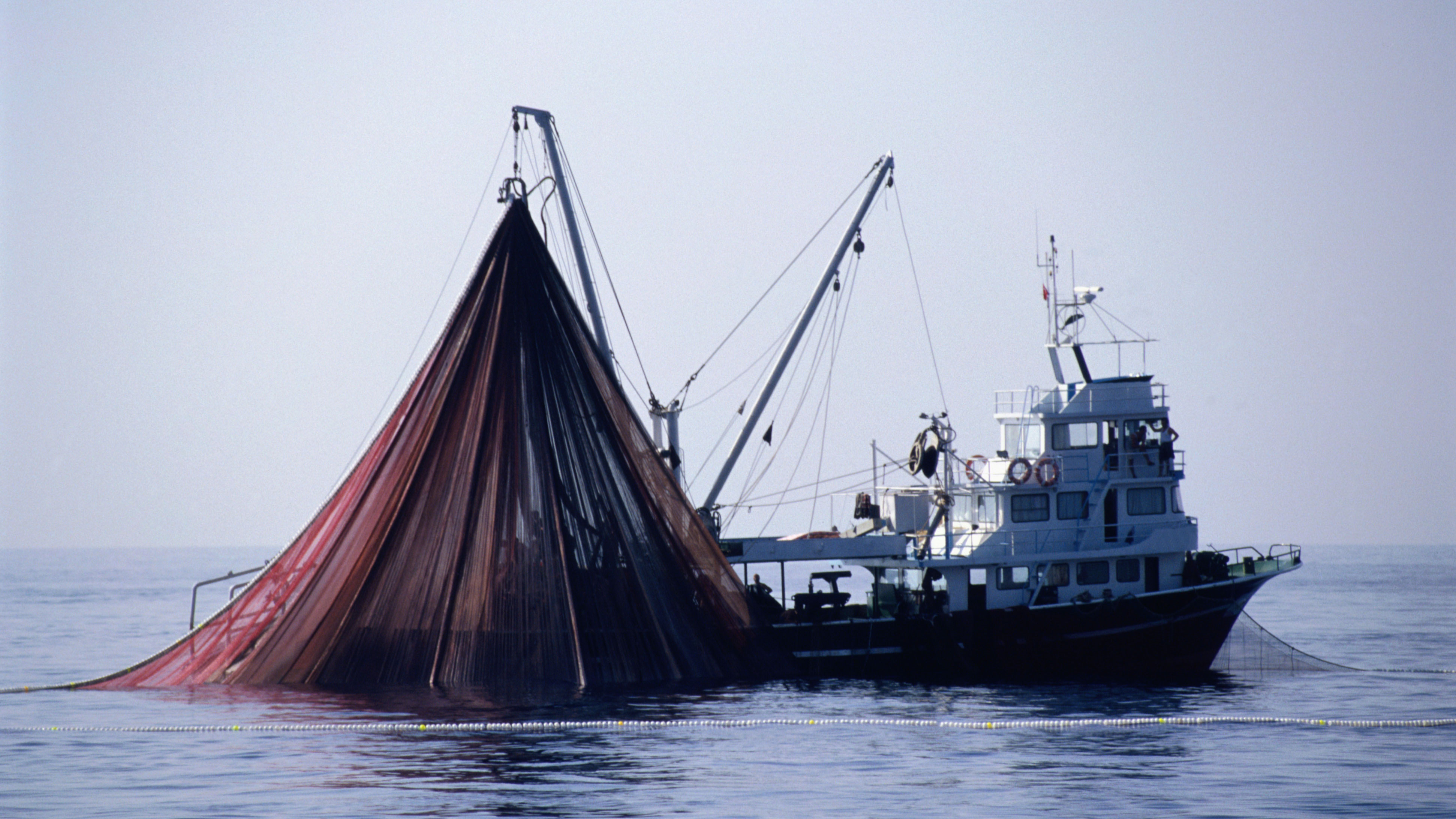 Harvest Strategies: The next phase of fisheries management