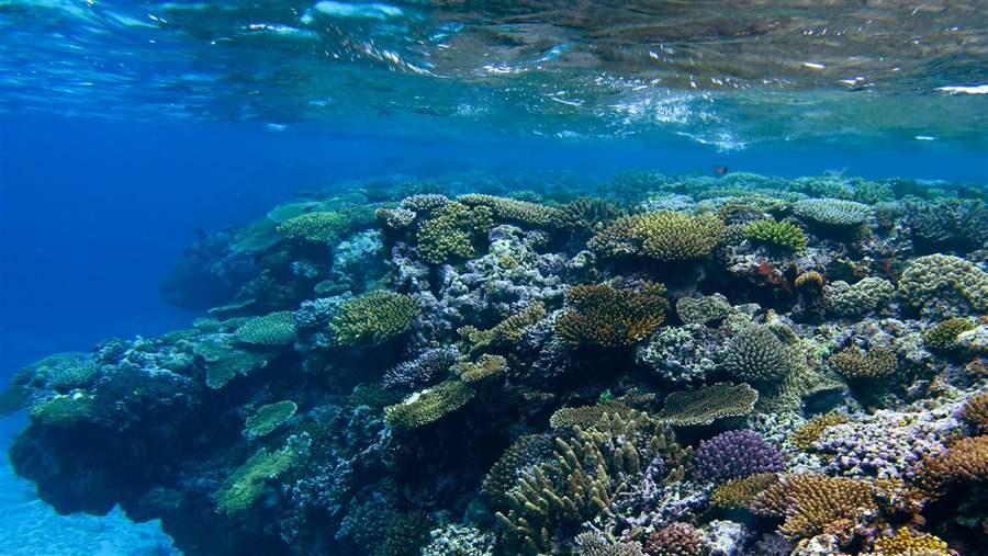 Preserving New Caledonia S Marine Environment
