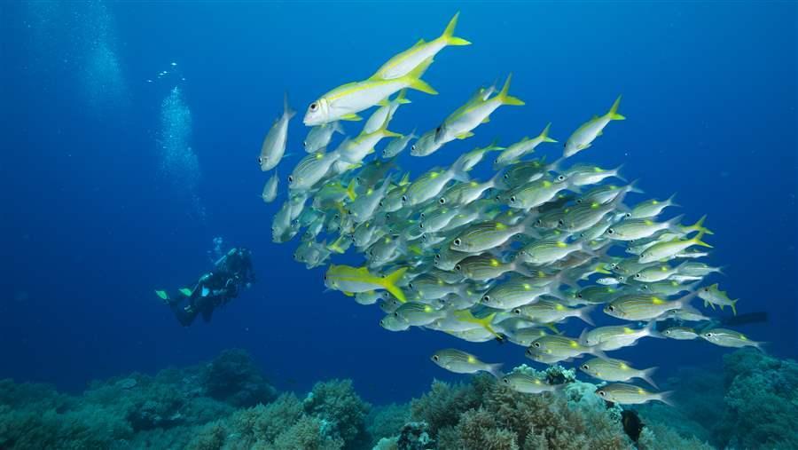 Palau Islands, Pew Charitable Trust