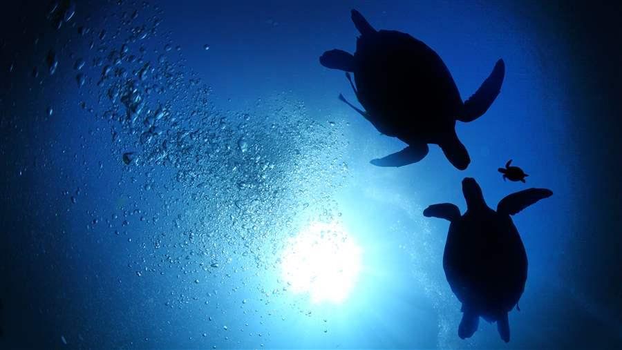 Green turtles would be helped by a new marine reserve
