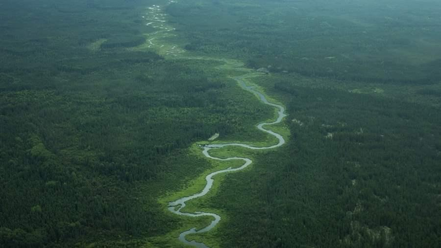 An aerial view of intact boreal forest in the proposed Pimachiowin Aki World Heritage site.