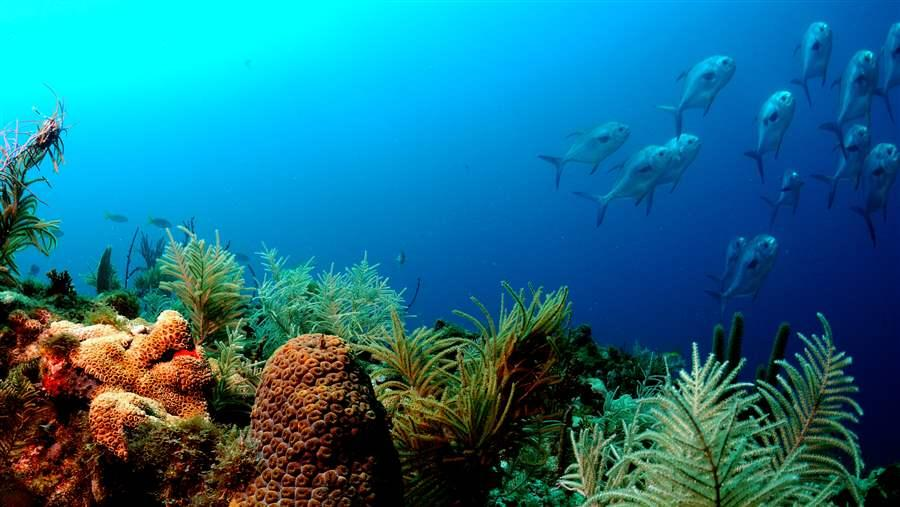 5 Issues Driving Ocean Conservation