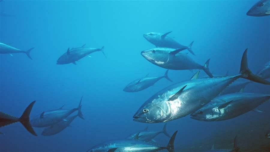 IATTC Pacific Bluefin