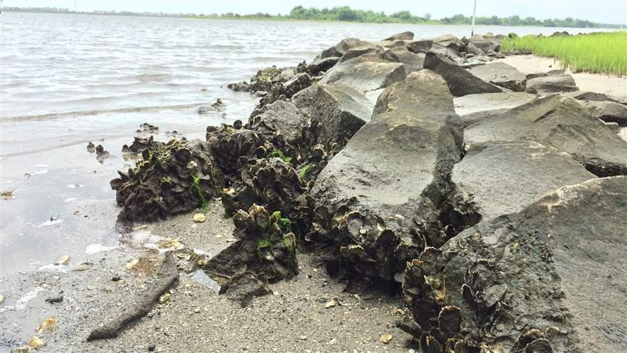 Oysters help combat erosion