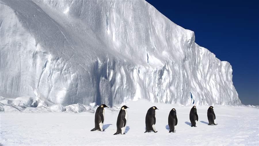Ross Sea Marine Protected Area