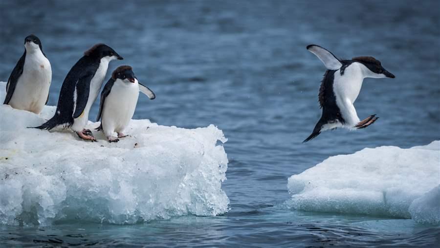 Penguin habitat in Antarctica