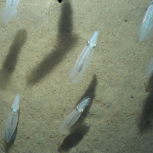 """Fisheries + Oceans"" Newsletter featuring ""Jellyfish ..."