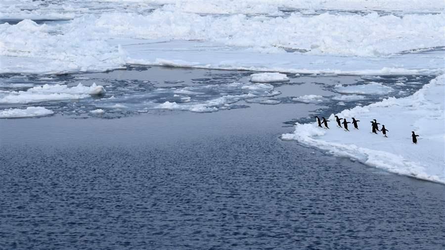 Penguin population