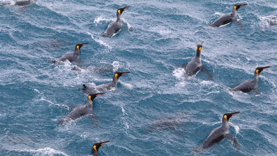 Wildlife in South Georgia and the South Sandwich Islands